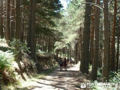 Pinar de Canencia y Mina de Plata del Indiano;clubes de senderismo;bosque de irati rutas
